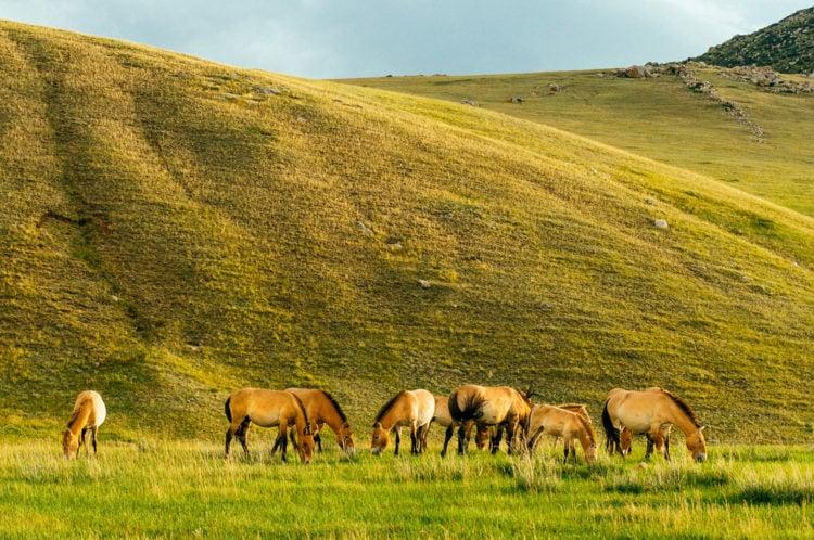 Hustai National Park, Mongolia