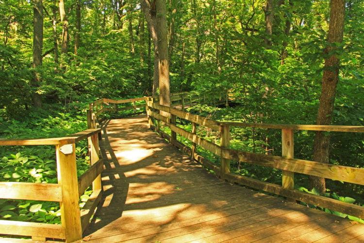 Experience nature at Idyllwild Nature Center