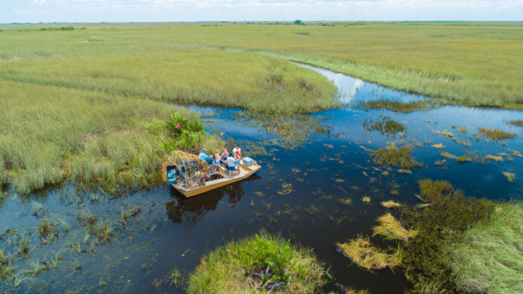 Visit the Everglades National Park