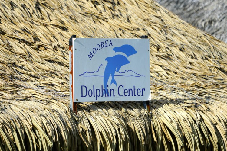 Visit the Moorea Dolphin Center