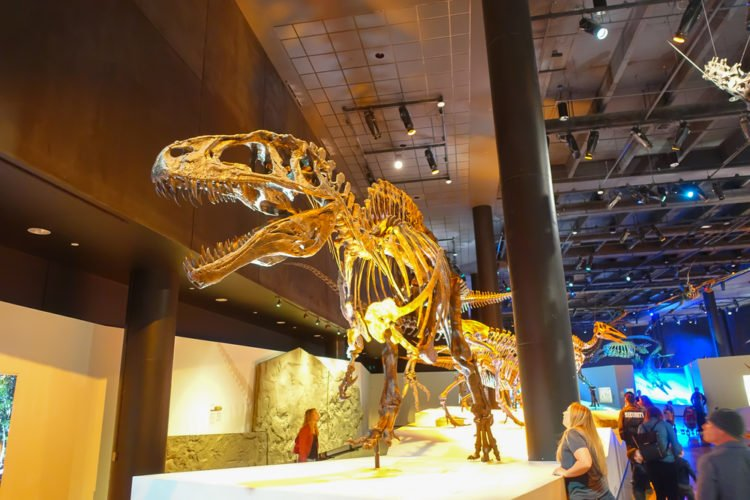 Go to a Late-Night Opening at the Houston Museum of Natural Science