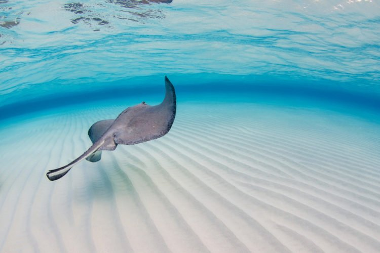 Get Up Close and Personal with a Stingray