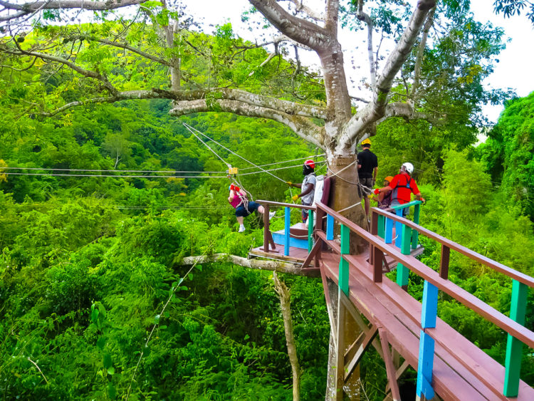 Whizz Through the Trees in the Antigua Rainforest