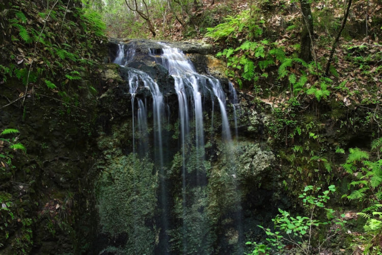 Falling Waters State Park Falls, Florida