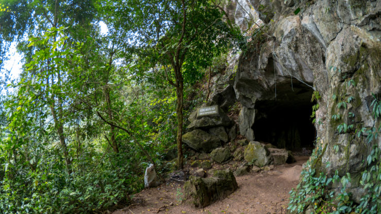 Explore the Cuc Phuong National Park