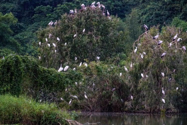Check out the Thung Nham Bird Garden