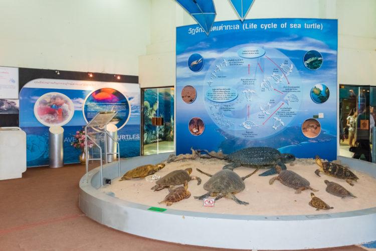 Tour the Turtle Conservation Center