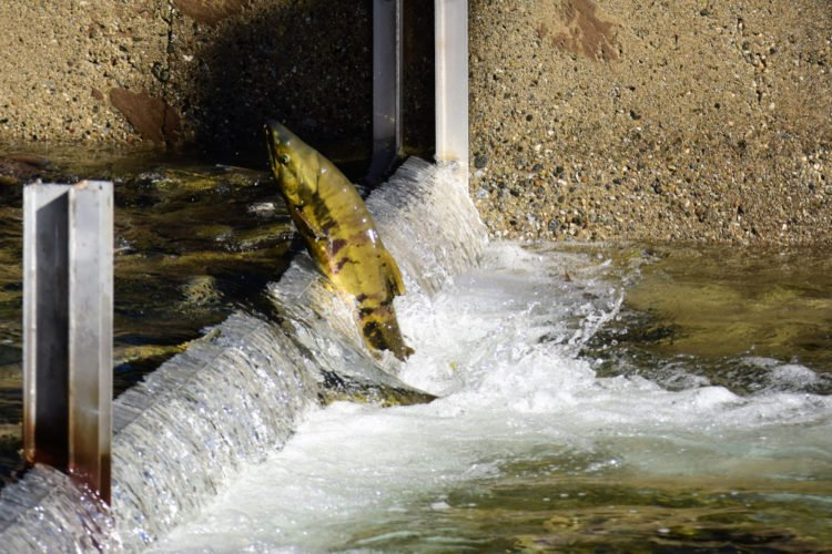 Silver Creek Fish Hatchery