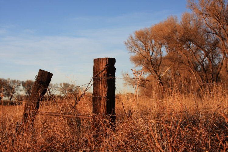 Take a Stroll in San Pedro Riparian Conservation Area