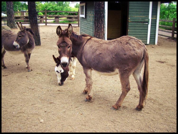 Feed the goats at the Doghill Fairytale Farm