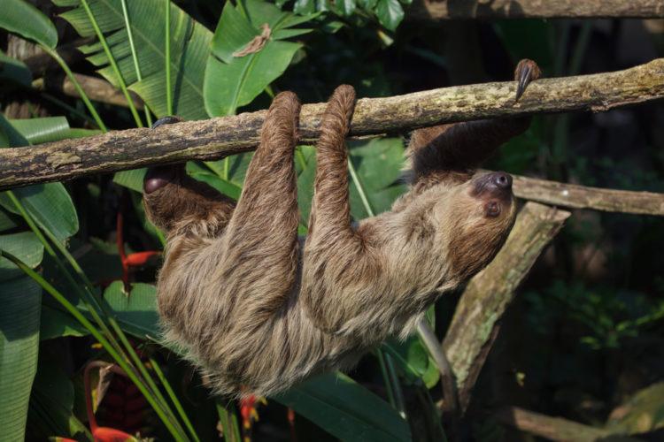 See the Animals at the Bioparque Los Ocarros