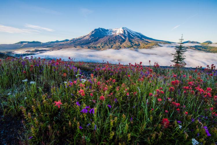 Mount St. Helens National Volcanic Monument, Washington
