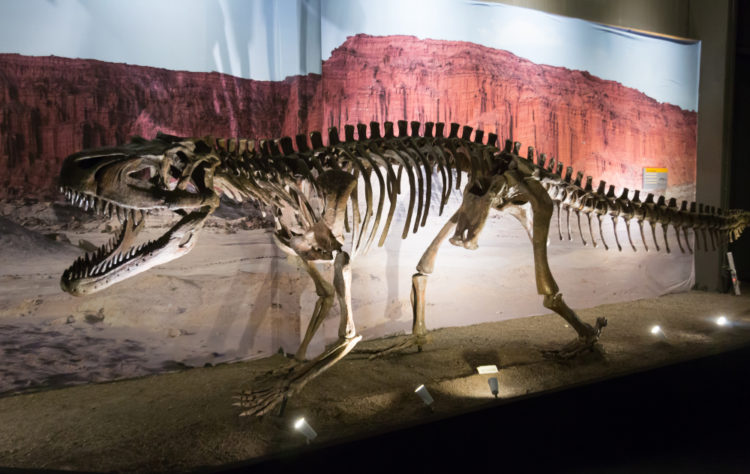 Admire the fossils at the Paleontology Museum