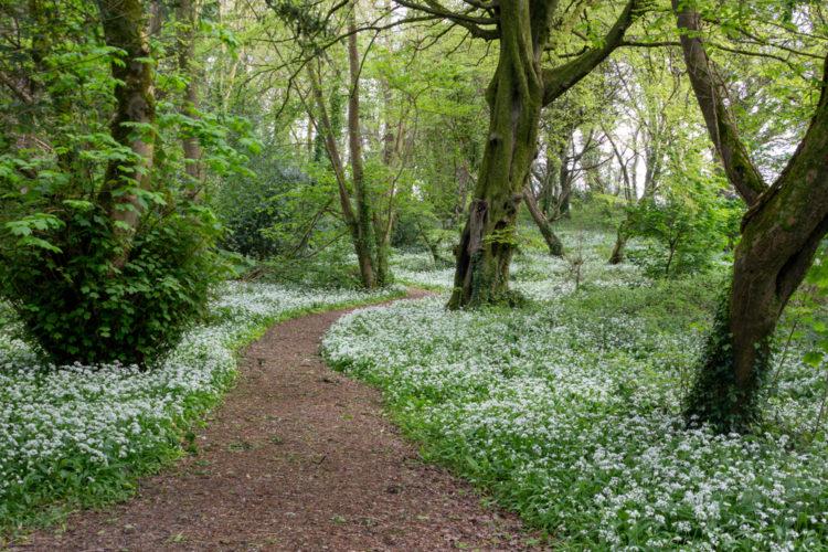 Explore Ballyseedy Wood