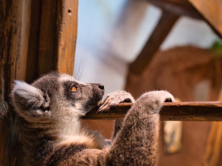 Get Close to the Animals at Tropikariet