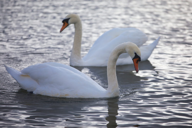 Explore the Tralee Bay Wetlands Centre