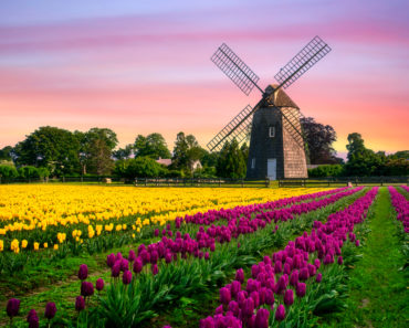 10 Amazing Tulip Farms to Visit in the United States