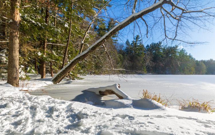 Get back to nature at McLean Game Refuge