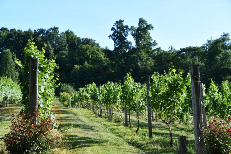 Enjoy a wine tasting at Lost Acres Vineyard