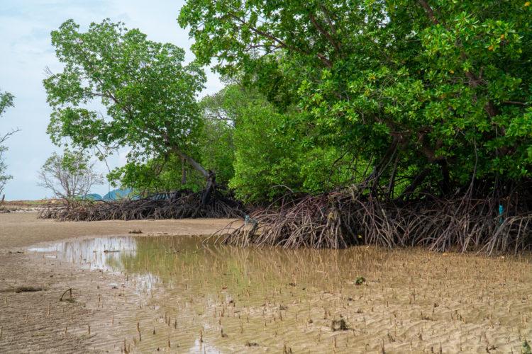 Ulu Choh Dirt Park