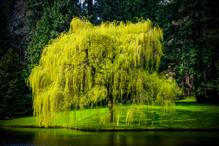The Bloedel Reserve, Washington