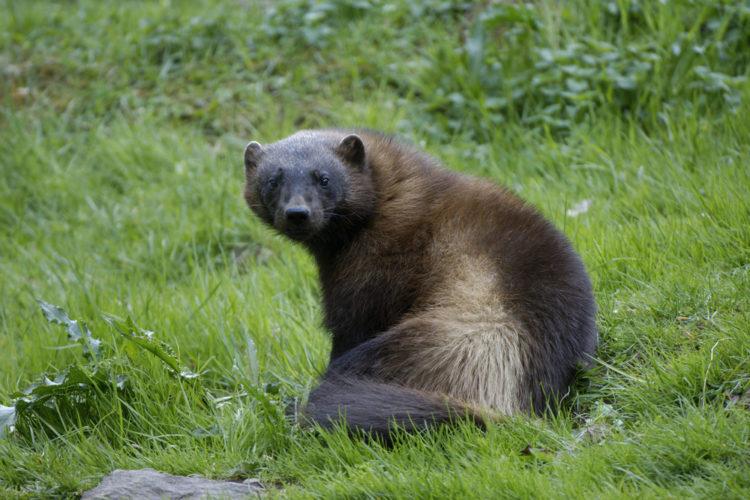 See the Animals at Skanes Djurpark