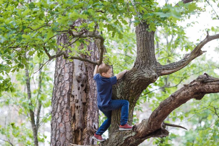 Climb Dewey Granby Oak