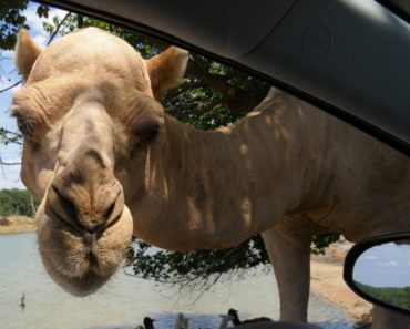 The 10 Best Drive Thru Safaris in the United States